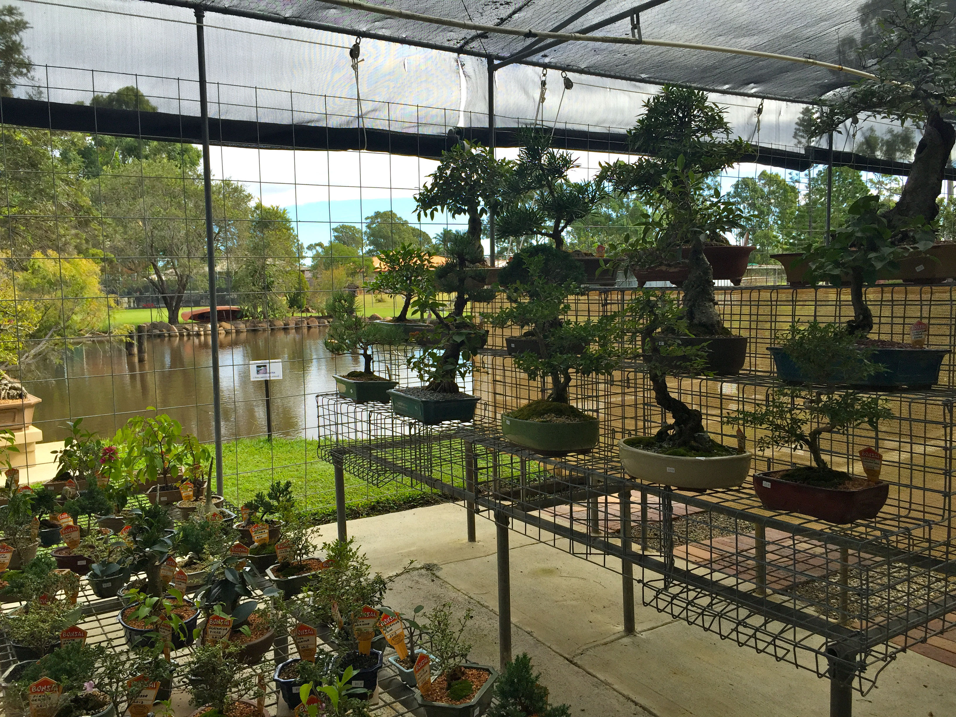 Bonsai Northside Nursery, Morayfield © GreenSocks