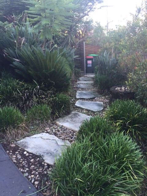 """After"" photo of Lane Cove pruning job © GreenSocks"