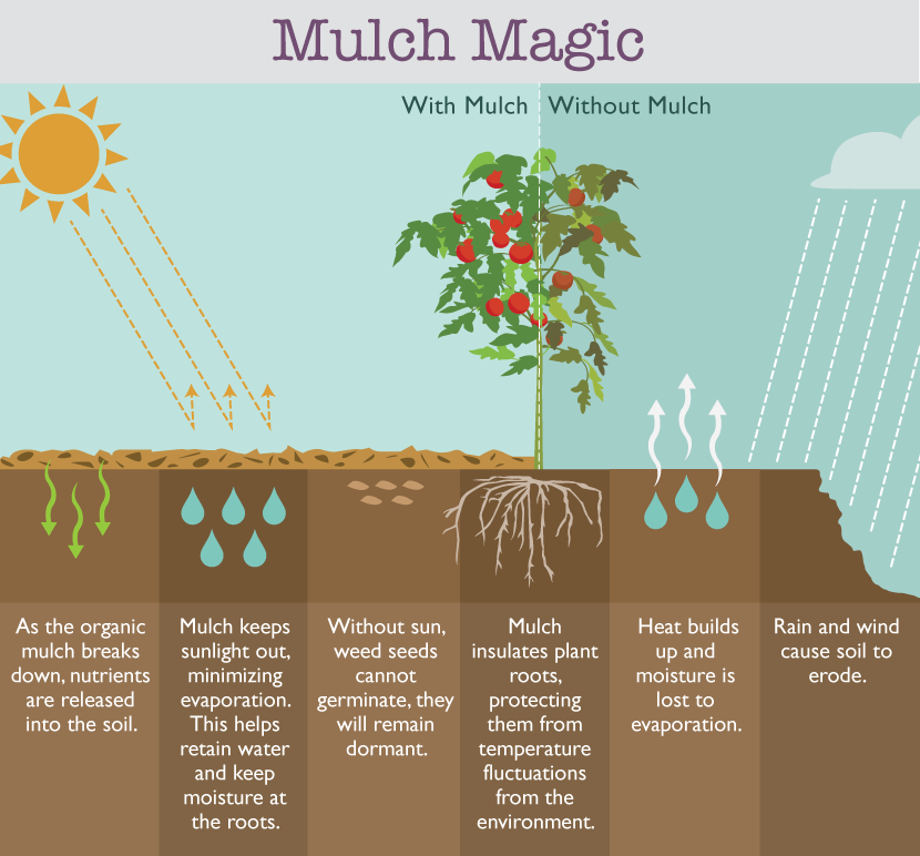 Can Mulch Prevent Weeds in Your Garden?